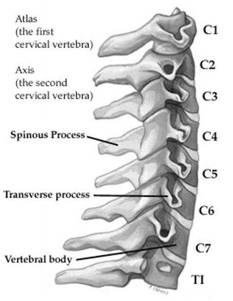 cuscino per ernia cervicale the cervical spine