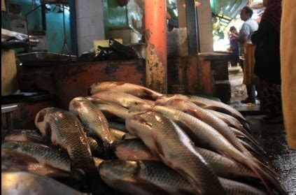fishing boat price in chennai tn annual fishing ban begins fish prices set to
