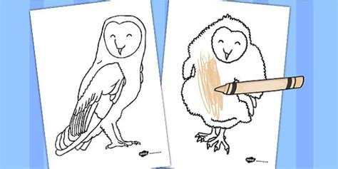 owl coloring sheets owl colouring sheets owl colouring sheets colouring