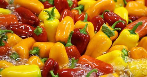 Mini Sweet 1 harmony valley farm vegetable feature mini sweet peppers