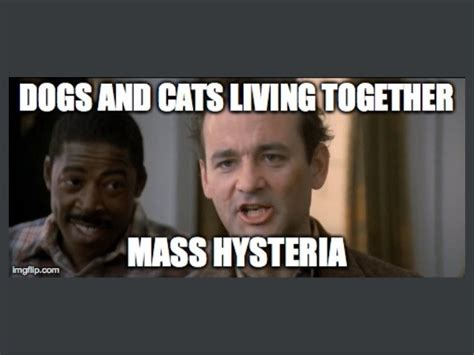 dogs and cats living together mass hysteria dogs and cats living together ideas