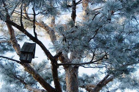 Garten Im Winter Gestalten by B 228 Ume Grimm Garten Schweiz