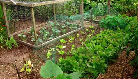 lada piante 7 steps to create a permaculture garden hobby farms
