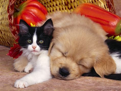 baby puppies and kittens baby puppy kitten baby animals photo 19796371 fanpop
