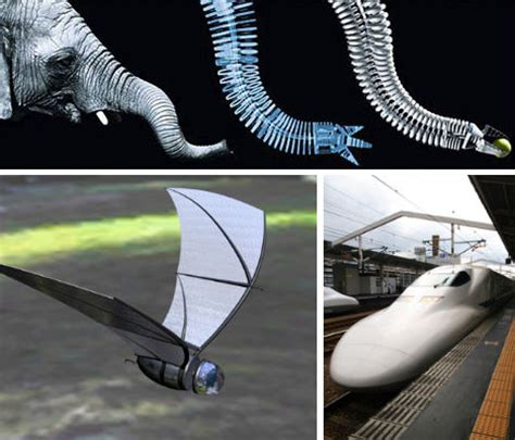 design engineer inventions biomimicry webecoist