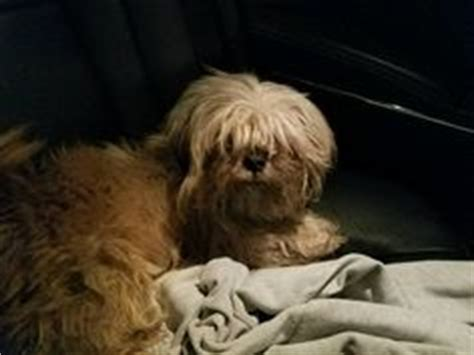found dogs near me 1000 images about found dogs ct on lost pets pounds and
