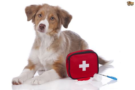 dogs aid aid kits for dogs must items pets4homes