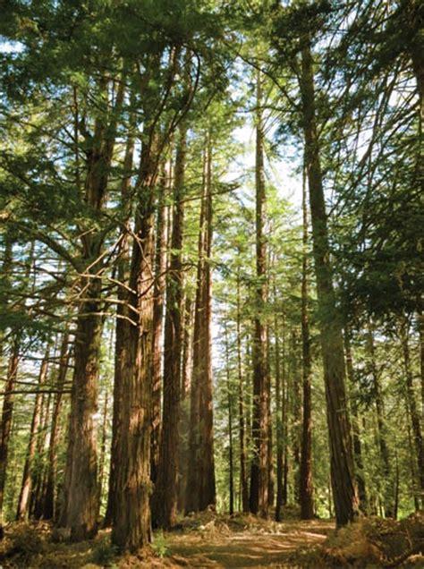 Theeffortlesschic big sur redwoods places i have been pinterest