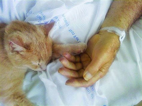 how to comfort a cat cat brings comfort to veterans in hospice life with cats