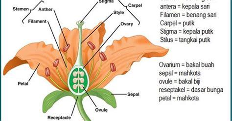 desain gambar tumbuhan gambar gambar pohon rotan manfaatnya batang tumbuhan di