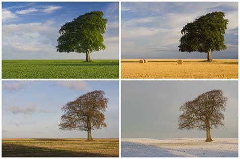 tree seasons come seasons 1848691815 seasonality the archaeology of changing seasons