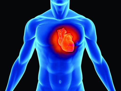 Is Jantung 20 makanan untuk jantung yang sihat celoteh ummi