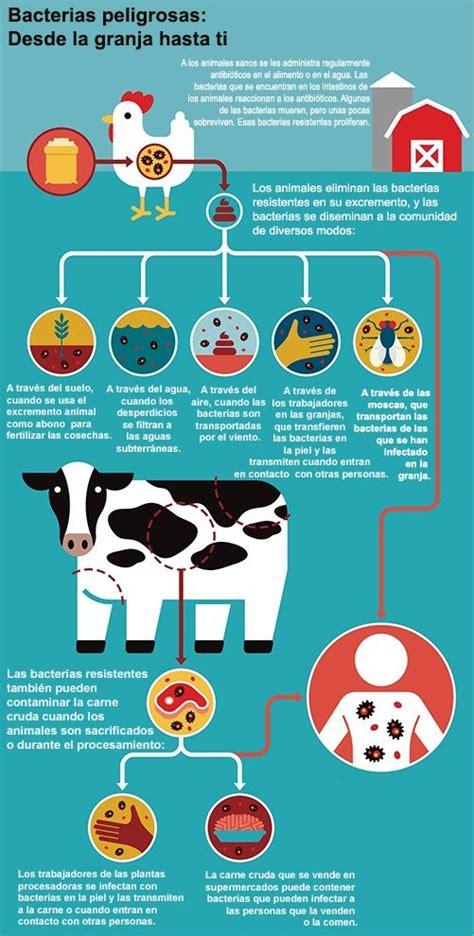 la verdad de los antibioticos en la carne   el diario ny
