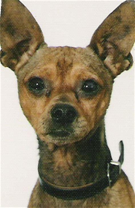 www hunde suchen ein zuhause de klick mich