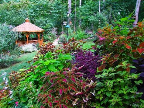 2015 year of the coleus custom landscaping