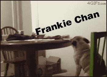 pug on chair gif pug on chair frankie chan version by animadk on deviantart