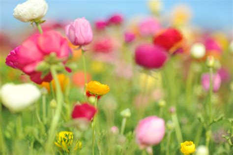 beautiful spring flowers beautiful spring pictures spring wallpaper android apps
