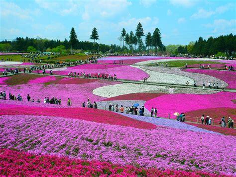 mount fuji flower festival japan most beautiful places