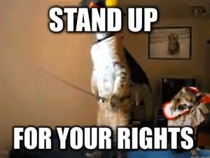 puss boots cat meme