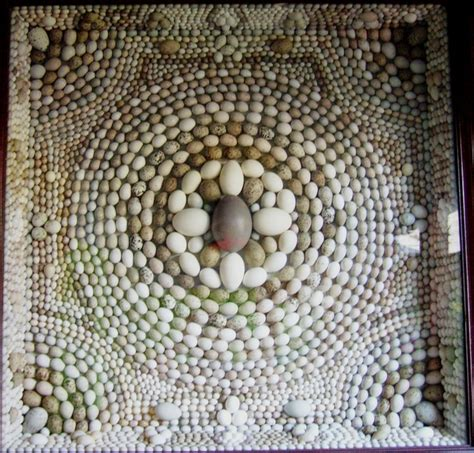 Egg Collection Bird Eggs Identification Image Search Results