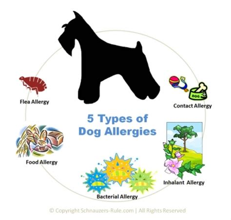 puppy food allergy allergy sign quotes