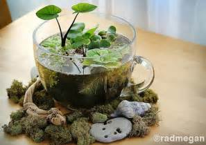 Home Design 3d Outdoor And Garden Tutorial 24 Of The Most Beautiful Ideas On Indoor Mini Garden To