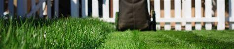 summer lawn care tips summer lawn care tips shank s lawn blog