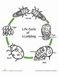 butterfly life cycle coloring sheet homeschool worksheets color the life cycle butterfly homeschool