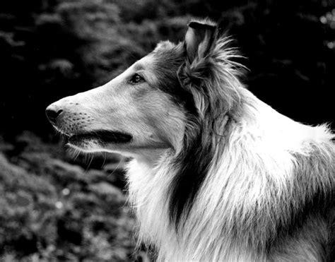 puppy pal pal
