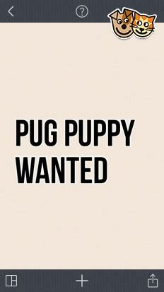 wanted pug puppy pug puppy wanted stevenston ayrshire pets4homes