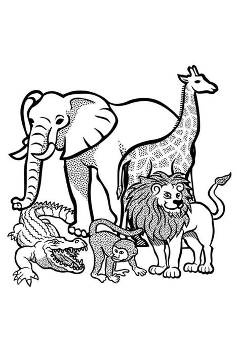 coloriage animaux sauvages dafrique vecteur dessin