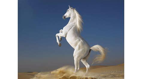 white beach horse 4k wallpaper free 4k wallpaper