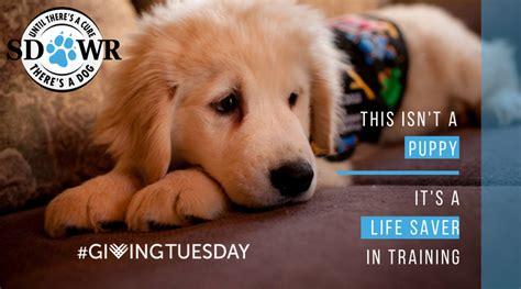 service puppy raiser sdwr donations