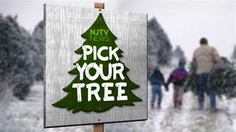 cut down your own christmas tree edmonton where to cut your own tree 2014 njtv news