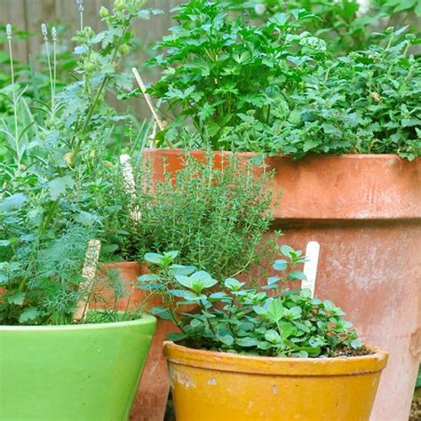 herb garden basics how to start a balcony kitchen garden complete guide balcony garden web