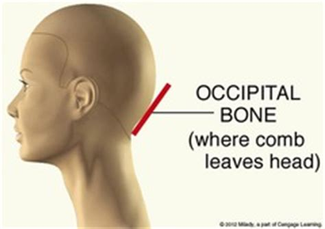 Occipitsl Bone Do With Hritcutting | milady chapter 16 hair cutting flashcards quizlet