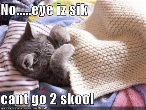 Sick Cat Meme - books crafts pretty things blog winners of my giveaway