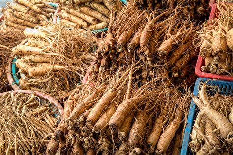 Ginseng Korea Ginseng ginseng health benefits facts and research