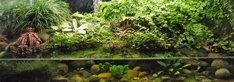 Japanese Home Interior Design paludariums on pinterest terrarium dart frogs and