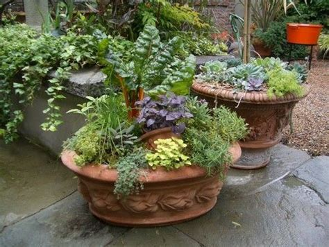 Herb Container Gardens Potted Herb Garden Ideas