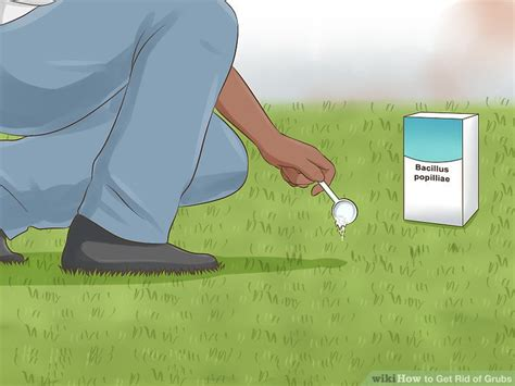 how to kill grubs naturally 2 easy ways to get rid of grubs wikihow