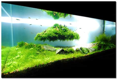 Tank Aquascape by Aquascape Indonesia Material Dan Panduan Aquascaping