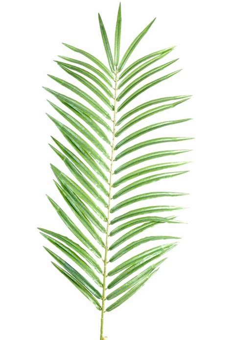 Pot De Fleur Plastique 5192 by Fausse Feuille De Palmier Palme De Palmiers