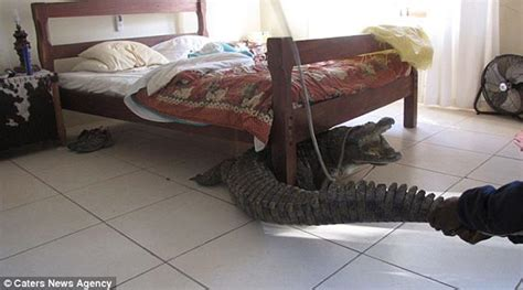crazy things to do in bed 10 strangest things found under beds oddee