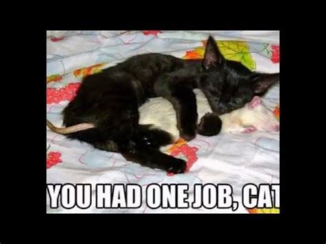 cat puns   day youtube