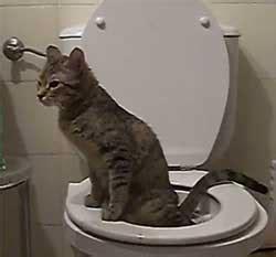 image de chat qui fait caca