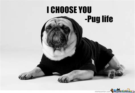 i didn t choose the pug i didn t choose the pug by the big g meme center