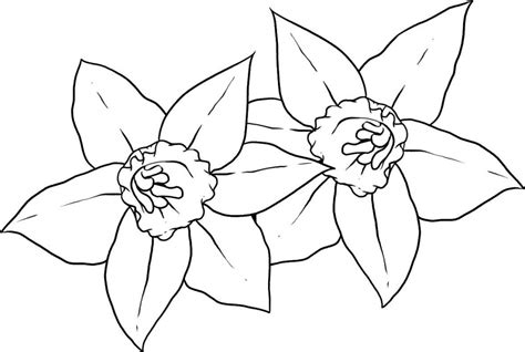 daffodil coloring pages az coloring pages