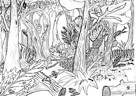 rainforest waterfall coloring page habitats para colorear biopedia