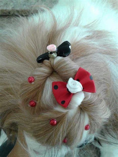 shih tzu top knot accessories 253 best grooming shih tzu havanes images on